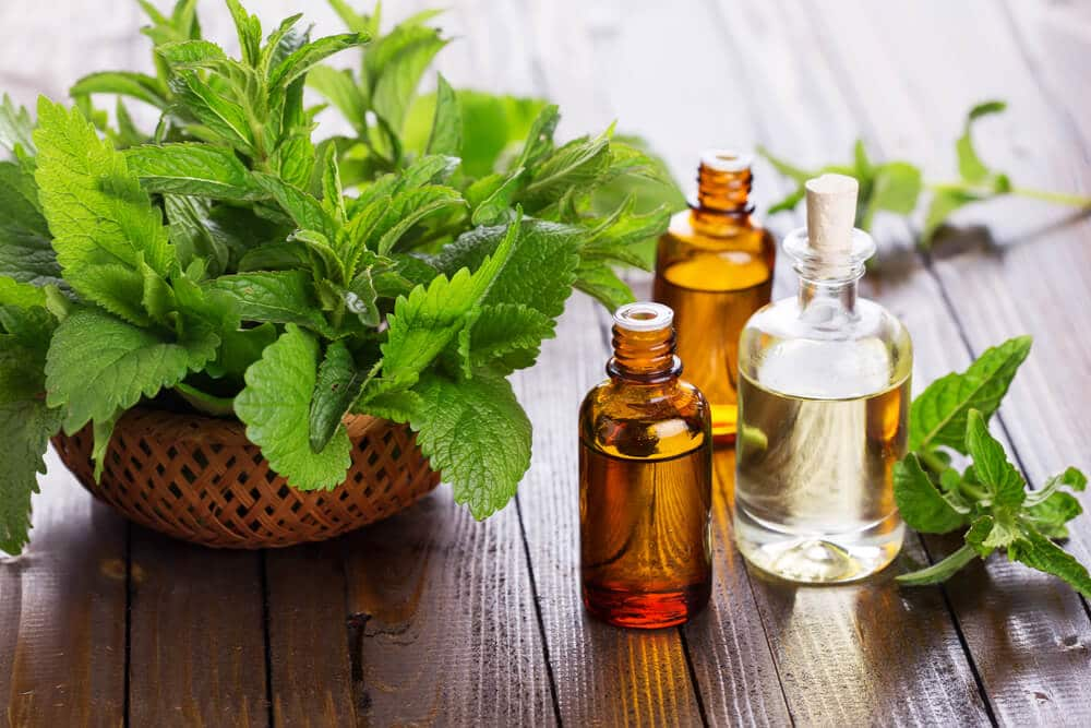 Does Peppermint Oil Get Rid of Spiders