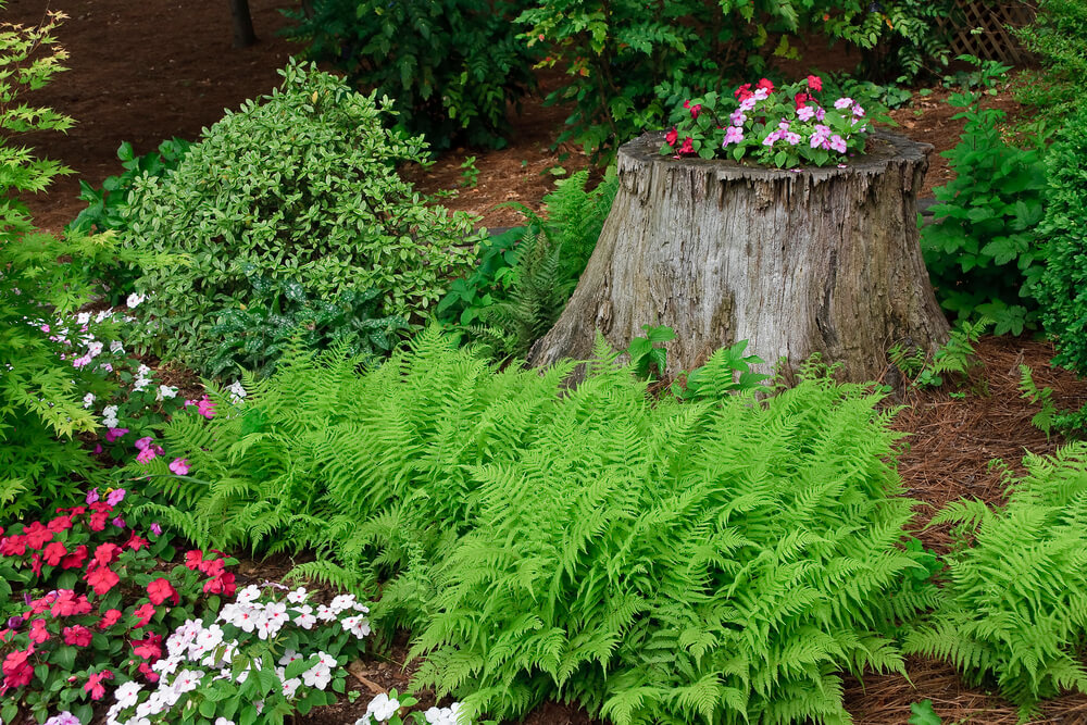 How to Decorate a Tree Stump in the Front Yard