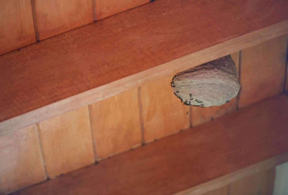 How to Get Rid of Wasps in Roof Eaves
